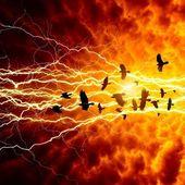 вороны в темное небо — Стоковое фото