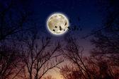 Full moon, ravens — Stock Photo