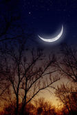 Night sky with moon — Stock Photo