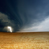 Stormy sky, ripe barley — Stock Photo