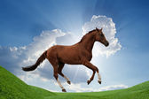 Horse on green field — Stock Photo
