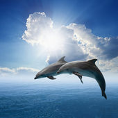 Dolphins jumping — Stock Photo
