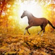 Horse in fall park — Stock Photo