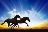 Two running horses — Stock Photo