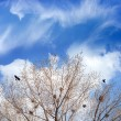 Bird nests on trees — Stock Photo