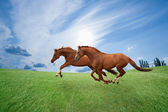 Running horses — Stock Photo