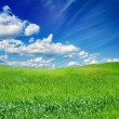 Green field, blue sky — Stock Photo