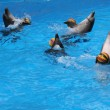Games of dolphins with balls — Stock Photo #43703179