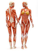 Female musculoskeletal system — Stock Photo