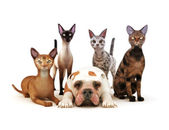 Group of cats posing with one dog — Stock Photo