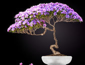 Bonsai potted tree — Stock Photo