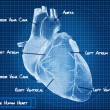The Human heart blueprint concept. — Stock Photo