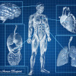 The Human Blueprint concept — Stock Photo