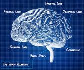 The human brain blueprint — Stock Photo