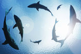 School of sharks circling from above — Stock Photo