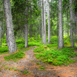 Itinerary in the forest — Stock Photo