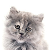 Little cat — Stock Photo