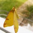 yellow butterfly — Stock Photo #12361449