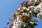 Wreath rosy delicate flower — Stock Photo