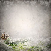 Grunge background template with conifer tree snowy branch — Stock Photo