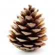 Pine cone isolated on white background — Stock Photo #38894351