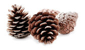 Group of pine cones isolated on white background — Stock Photo