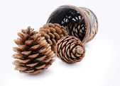 Group of pine cones and wicker basket isolated — Stock Photo