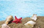 Shells on sand with clear blue water background  — Stock Photo