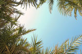 Palm tree leaves naturally framing the sky — Zdjęcie stockowe