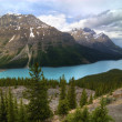 Lac Peyto — Photo #33510653