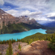 Lac Peyto — Photo