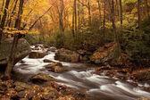 Sonbahar orman çağlayan — Stok fotoğraf
