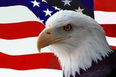 American Bald Eagle on Flag — Stock Photo