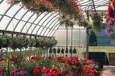 Greenhouse full of flowers — Stock Photo