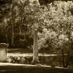Old Cemetery — Stock Photo #35489373