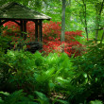 植物园 — 图库照片 #37067405