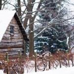 Snowy Winter Stream — Stock Photo #39006929