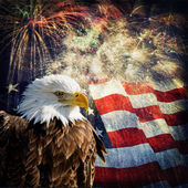 Bald Eagle & Fireworks — Stock Photo