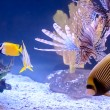 Tropical Fish — Stock Photo #39500933