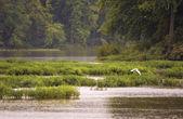 Garça-branca-branco — Fotografia Stock