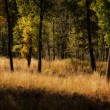 Fall Forest Background — Stock Photo #41272081