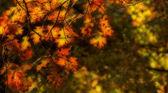 Autumn Oak Leaves Background — Stock Photo