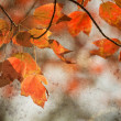 Autumn Maple Leaves Background — Stock Photo #43457587