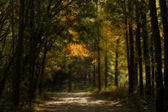 Enchanted Autumn Forest — Stock Photo
