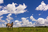 Country Field and Horse — Stock Photo