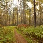 Autumn wood — Stock Photo #13388266