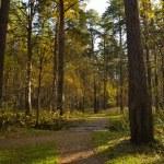 Autumn wood — Stock Photo #13388267