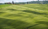 зеленые поля, тоскана, италия — Стоковое фото