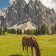 Odles,valley of Funes,south tyrol,Italy. — Stock Photo