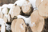 Wood pile in forest — Stock Photo
